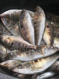 fishing-in-balaclava-boat